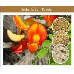 Best Quantity Food Additives Sesbania Gum Powder Available
