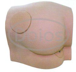 Buttock Intramuscular Injection Model