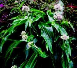 Extract Herbs