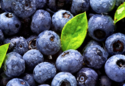 Blueberry Powder Extract