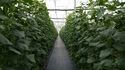Mapal Soilless Growing Trough Vegetables and floriculture