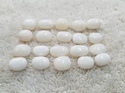 White Coral Moonga Gemstone