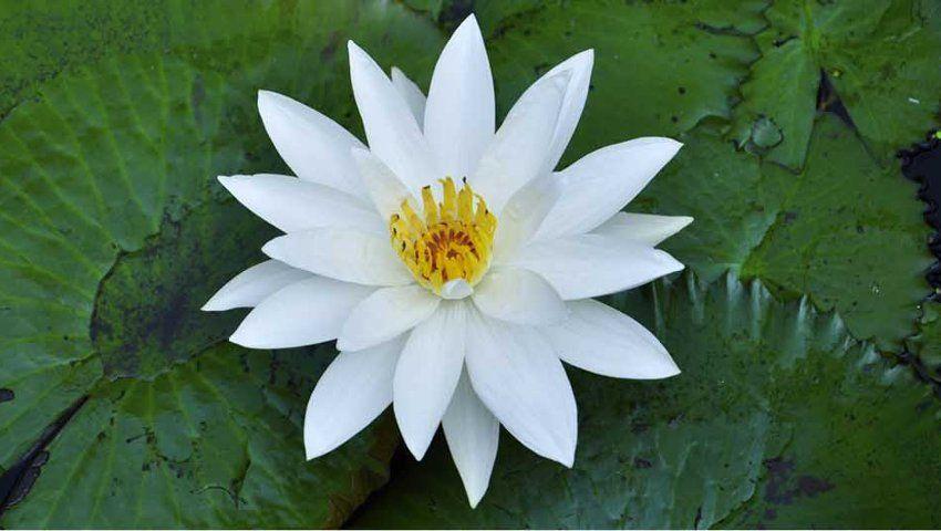 Lotus Environment Technology Pvt Ltd
