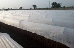 Crop Shield Crop Cover (17 GSM_white 1.6 mtrs)