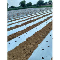 Agriplast Mulch Black and White Zero Transmission