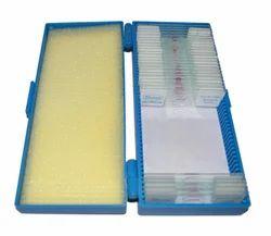 Microbiology Slides