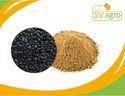 Sesami Nigrum Extract