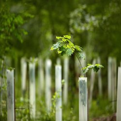 Tubex Tree Guard