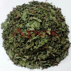 Field Mint Pudina