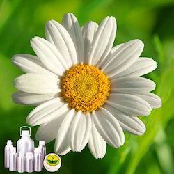 Chamomile Oil German