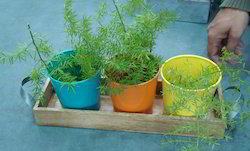 Planters With 3 Pots & Tray