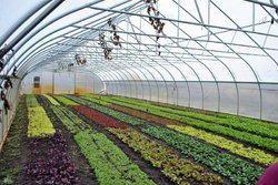 Horticulture Farm Development