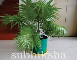 Indoor Ornamental Plants in 340 gsm