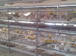 Broiler Battery Cages