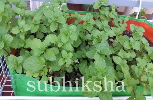 Subhiksha Organics Salem Manufacturer Of Grow Bag And Shade Net