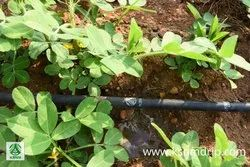 Pepsi Tube Irrigation Service