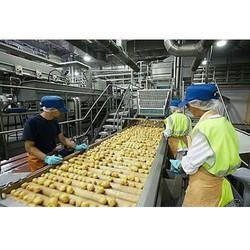Potato Chips Industrial Plant