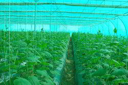 Green House HDPE Net