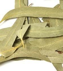 Nilgiri Leaves