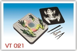 Simulated Frog Dissecting Kit Model
