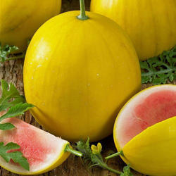 Melons Caribbean Cold-F 1 Seeds
