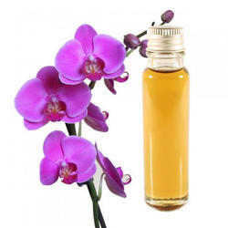 Orchid Absolute Oil