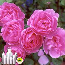 Rose Oil Bulgaria
