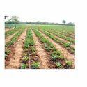 Drip Irrigation Line