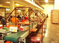 Belts Conveyor for Food Packing