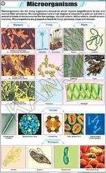 Microorganisms For General Chart