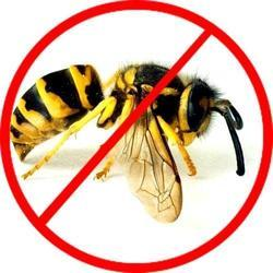 Beehive Removal Service