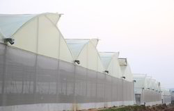 Ginegar Drip Lock Diffused (C-662) Greenhouse Covering Film