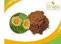 Sida Cardifolia Extract