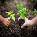 Bio Fertilizers Testing Services