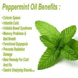 Peppermint Oil (Mentha Arvensis)