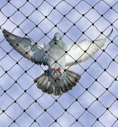 Birds Protective Nets
