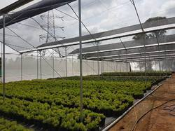 Ginegar Sunsaver SS Clear(C-779) Greenhouse Covering Film