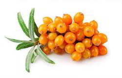 Sea Buckthorn Extracts Powder