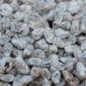 Fresh Cotton Seed