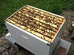 Beekeeping Project - Beehive Box