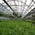 Greenhouse Consultancy Solution