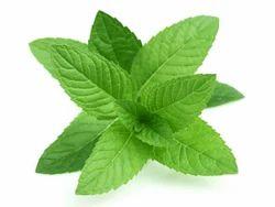 Mint - Pudhina Leaves
