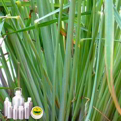 Lemon Grass Co2 Extract Oil
