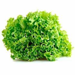 Locarno Leaf Lettuce Seed
