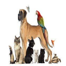 little lest pet shop app
