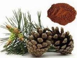 Pine bark extract india