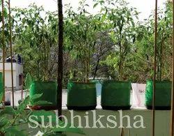 Grow Chilli Plants Bag