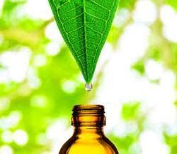 Leaf Extract