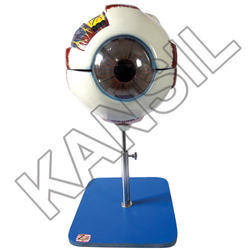 Eye Model on Stand