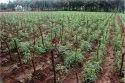Drip Irrigation Pipe Plant